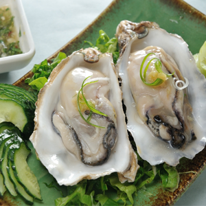 Special Food Oysters - Hào